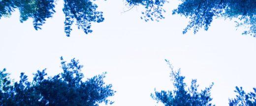 cropped-7d1_7887.jpg